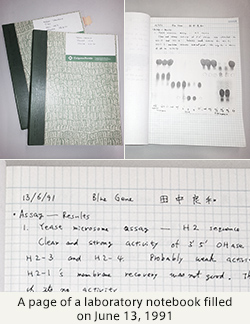 A page of a laboratory notebook filled on June 13, 1991