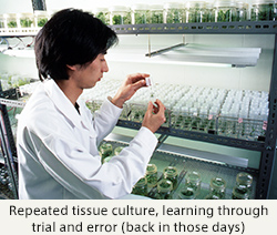 Repeated tissue culture, learning through trial and error (back in those days)