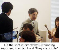 "On-the-spot interview by surrounding reporters, in which I said ""They are purple"""